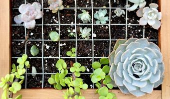 DIY Home Gardening Project With Modern Interior Designers