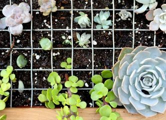 DIY Home Gardening Project With Modern Interior Designers 9