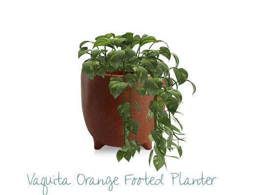 vaquita orange planter