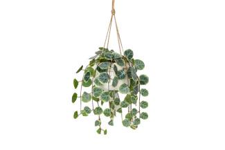 Faux Hanging Vine Potted Plant
